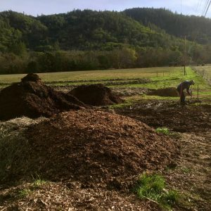 mulching at lane creek reserve