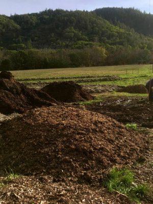 mulching at lane creek reserve