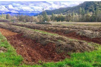 hugelkultur-mulch-beds-regenerative-agiculture