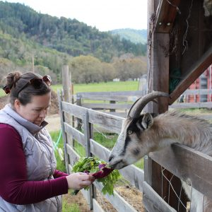 feeding-goats-at-lane-creek-reserve-farm