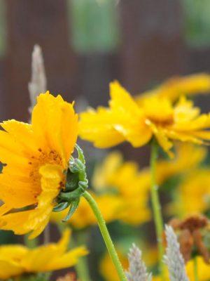 fresh-cut-flowers-rogue-valley-farm